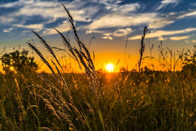 Petition für eine zukunftsfähige Landwirtschaft – jetzt unterschreiben