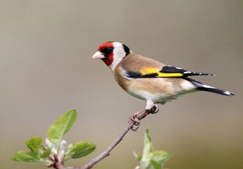 Vogelkunde-Grundkurs im Naturzentrum Neeracherried