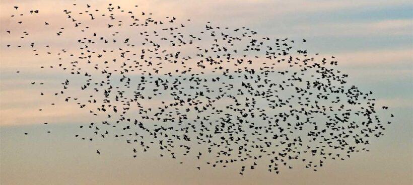 Zugvogeltag am 2./3. Oktober 2021
